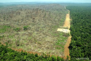 illegal-deforestation-and-land